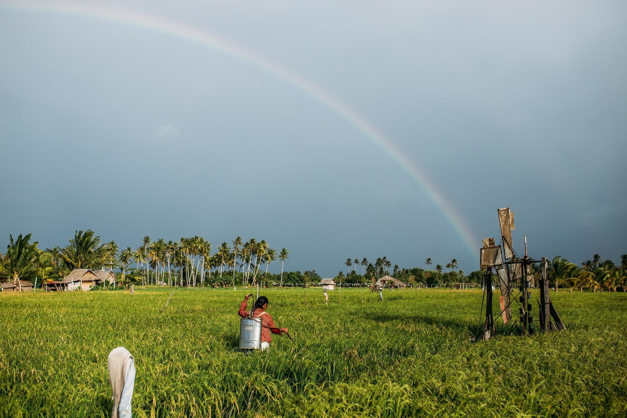 fumigating rice field farm