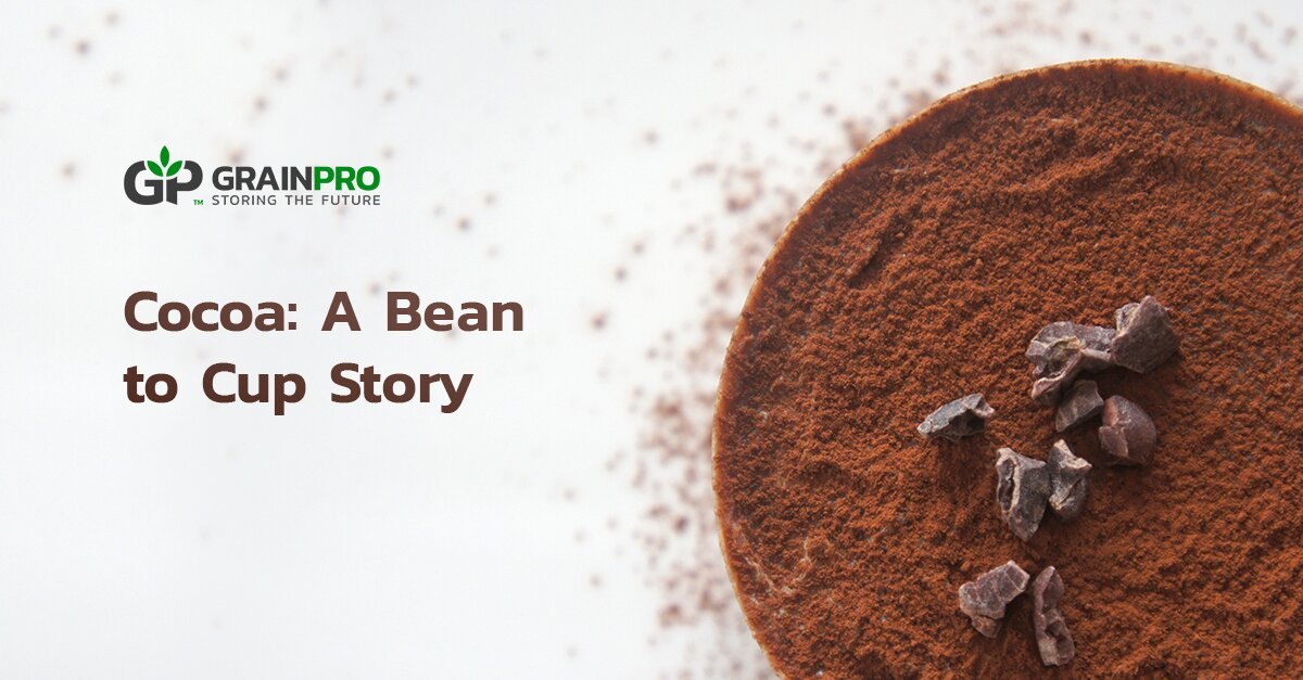 Cocoa Processing A Bean to Cup Story