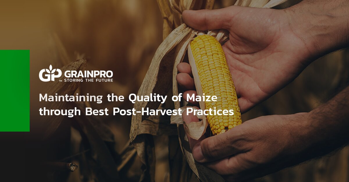 GP - Maintaining the Quality of Maize