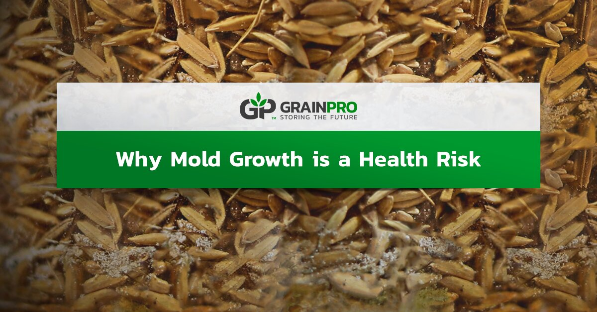 Mold Growth is a Healthy Risk