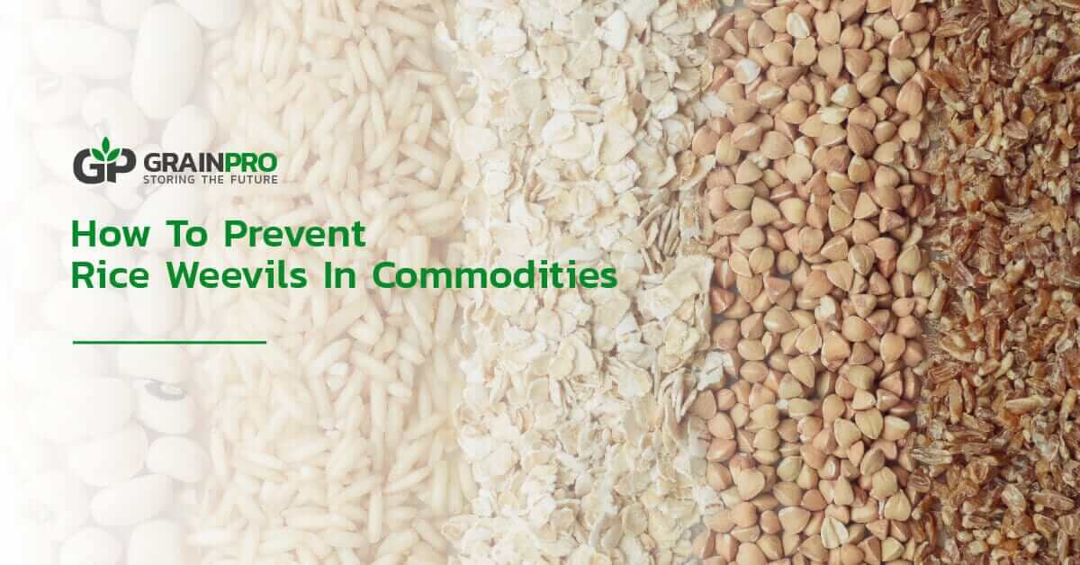 how to prevent rice weevils in commodities