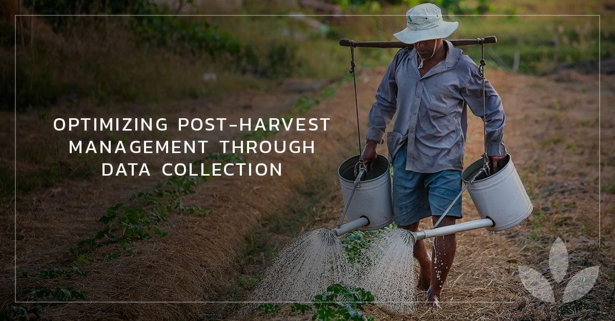 Farmer Man Watering the Plant