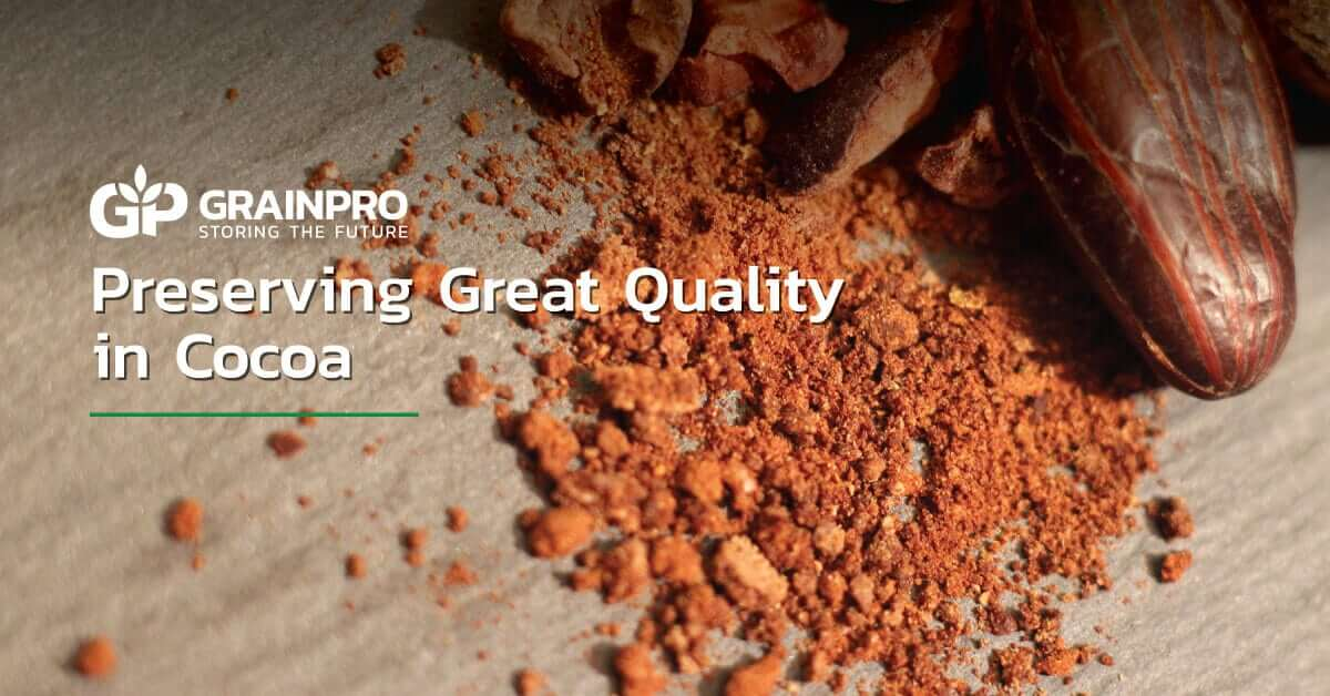 preserving great quality in cocoa