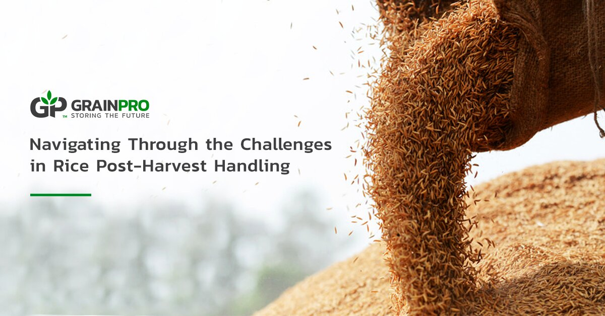 Navigating Through the Challenges in Rice Post-Harvest Handling