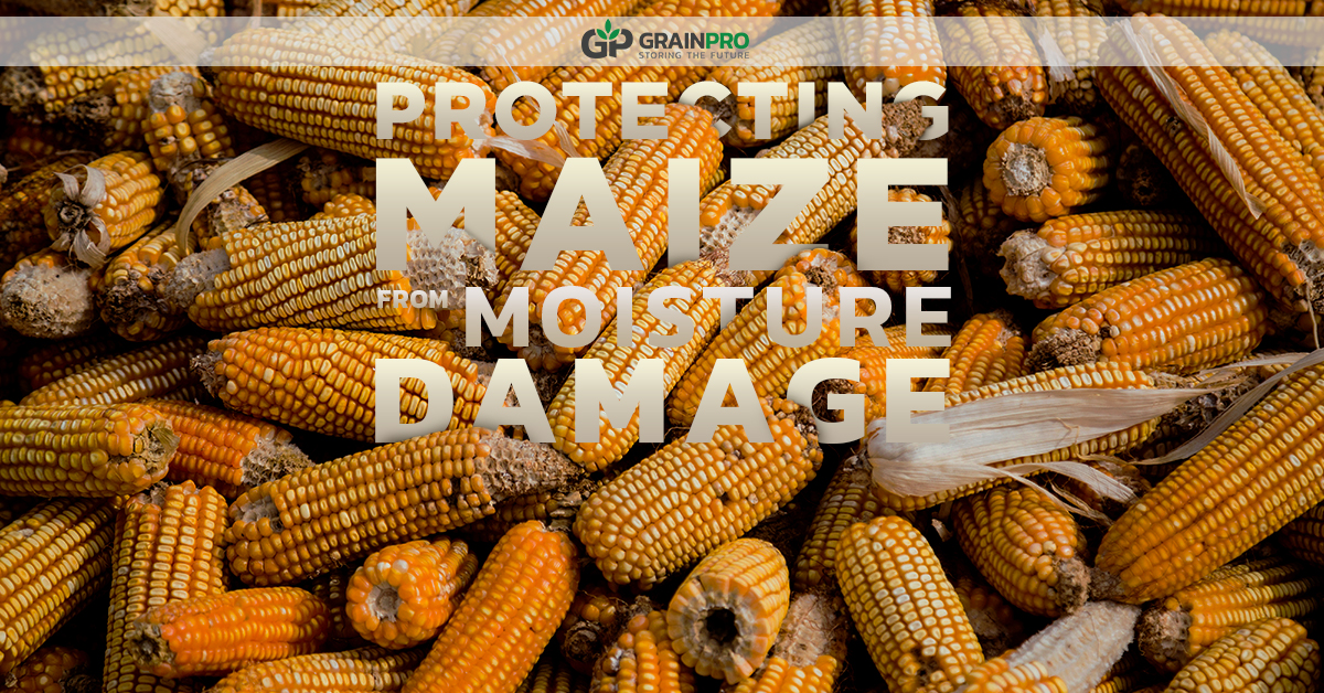 PROTECTING MAIZE FROM MOISTURE DAMAGE_3 1200 x 628 revs 4