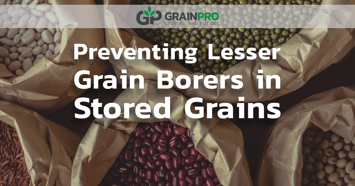 Preventing Lesser Grain Borer in Stored Grains