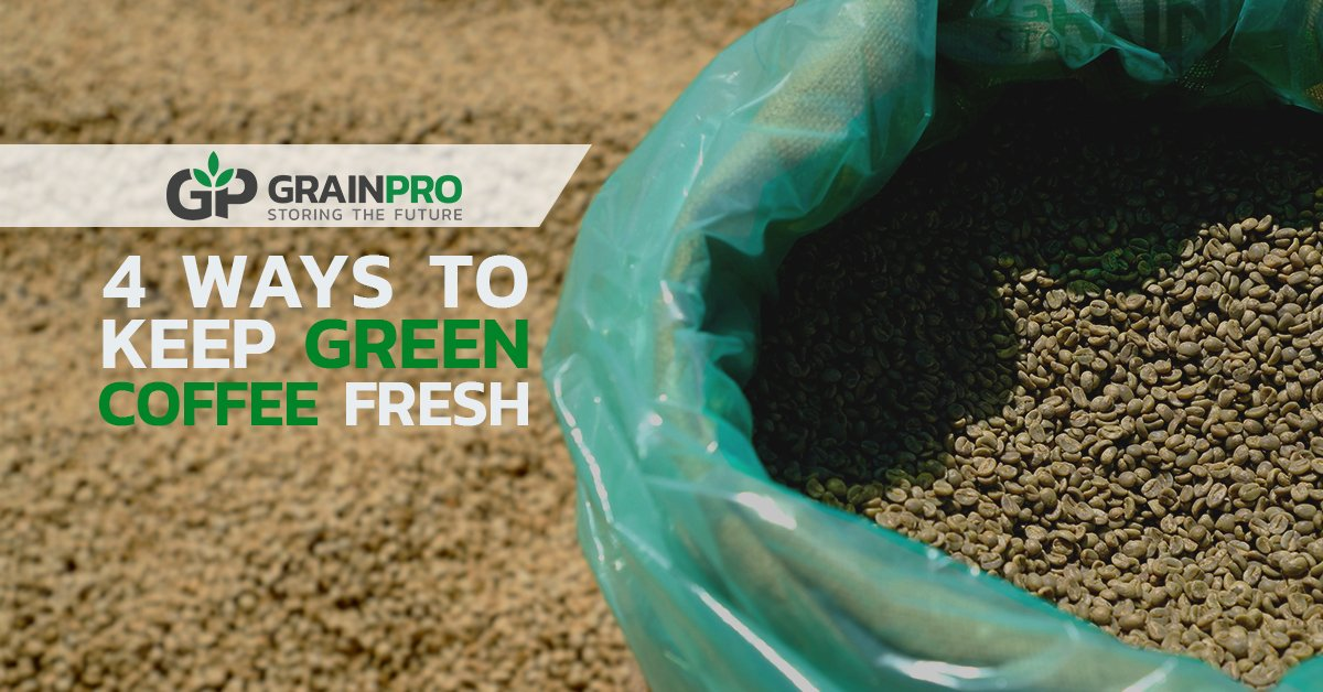 VERS 3_REVS 2 4 Ways to Keep Green Coffee Fresh