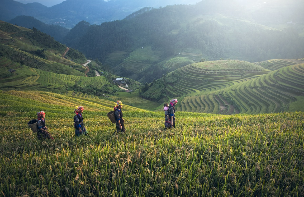 four women farmers walking on rice terraces field