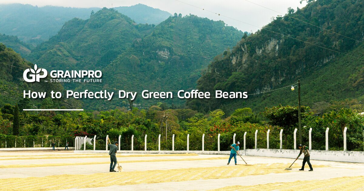 people drying coffee beans